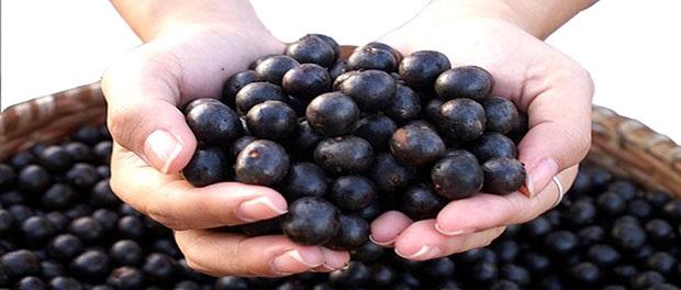 acai berry fruto
