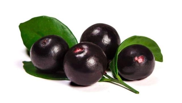 acai berry planta fruto