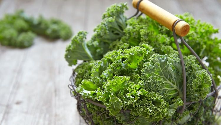 cultivo kale superalimento