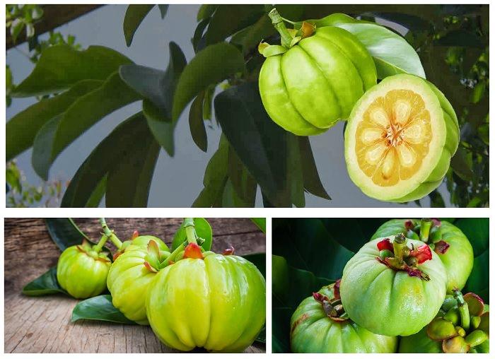 comprar garcinia cambogia fruto