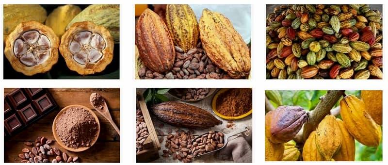 fruto cacao superalimentos Pro